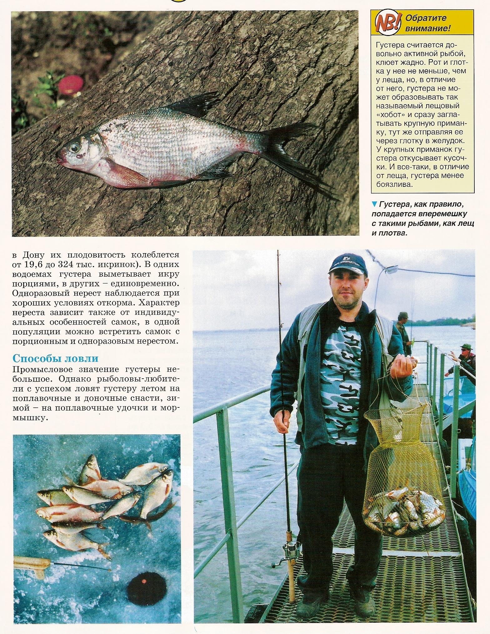 ловля рыбы бершей